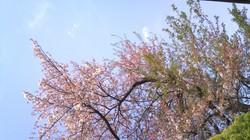 2011-04-17 13[2].37.55.jpg
