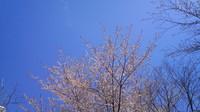 2012-05-05 13.36.01.jpg