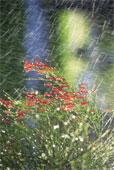rain fall3.jpg
