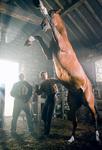 Warhorse1.jpg